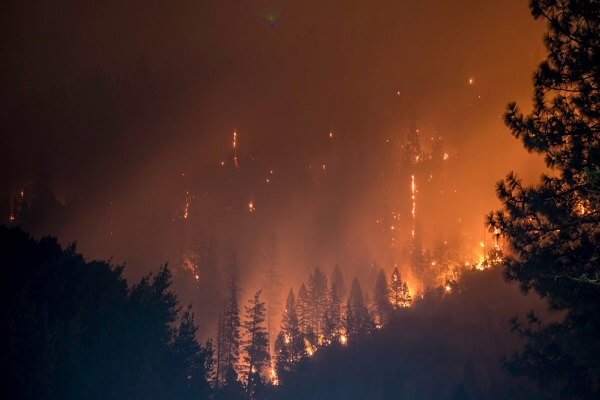 What led to forest fires in Australia? - 2 most important reasons